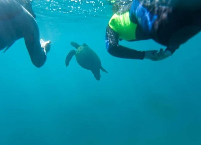 Diving in the Galapagos Guide and Tips